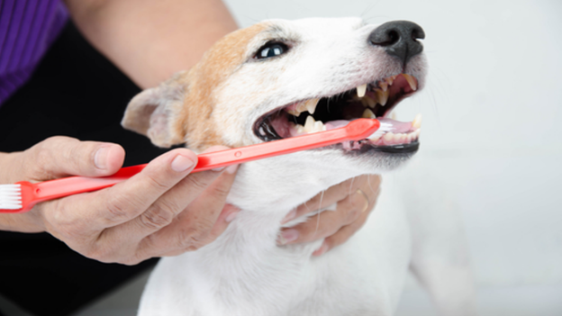 dog dental hygiene tips from northwoods vet hospital in athol idaho